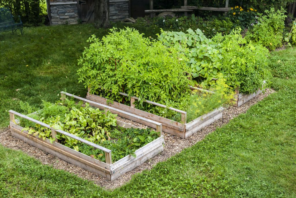 Vegetable Garden in Raised Bed