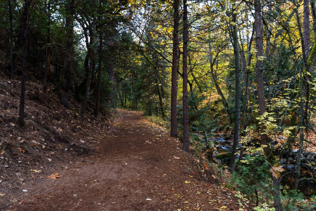 Unpaved path in a wooded park